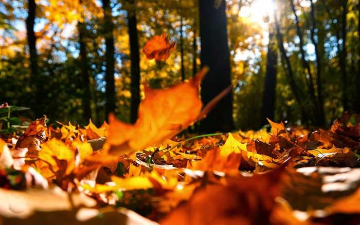 осень, осенние листья