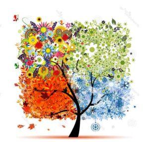 времена года, дерево, зима, осень