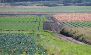 безвозмездный договор субаренды земельного участка