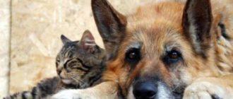 - проведение профилактических мер – есть антиблошиный ошейник или животное постоянно обрабатывается от прочих болезней.